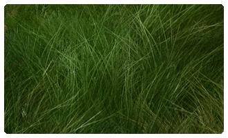 Piste en herbe
