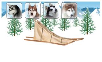 Attelage de 4 chiens