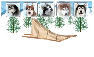 Attelage de 5 chiens