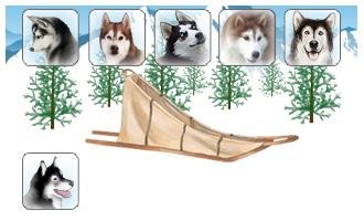 Attelage de 6 chiens
