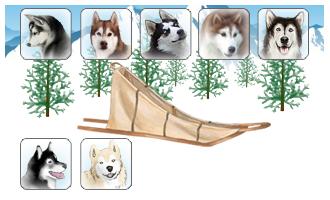 Attelage de 7 chiens