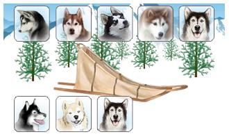 Attelage de 8 chiens