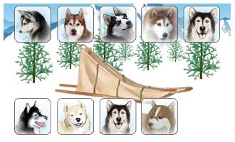 Attelage de 9 chiens