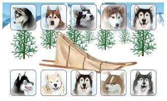 Attelage de 10 chiens