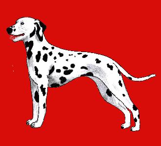 Comment je fais mes dessins - Coloriage dalmatien ...