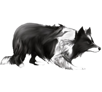 http://img.dogzer.com/image/51-race-chiens-borders-collie/563-robe-/2-chien-border-collie-2.png