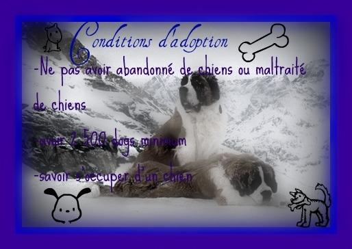 Chèvre dddd - Mâle (4 ans)