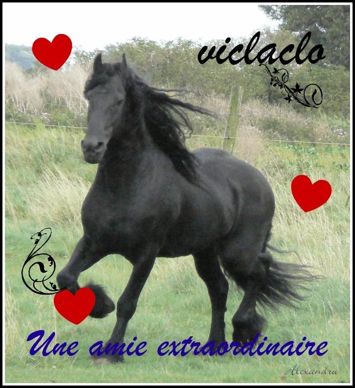Chien Pour viclaclo -  Femelle (0 mois)