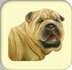 Elever un chien virtuel et jouer avec