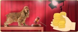"""Les chiens de race <a href=""""../chien-berger-blanc-husky-1041036/"""" title="""""""">Berger Blanc Suisse - Husky</a> disponibles sur le marché au plus offrant"""