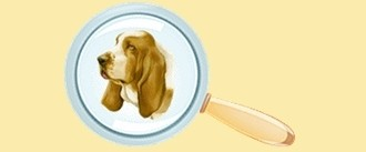 """Les chiens de race <a href=""""../chien-berger-blanc-husky-1041036/"""" title="""""""">Berger Blanc Suisse - Husky</a> à vendre"""
