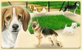Les chiens à l'abandon